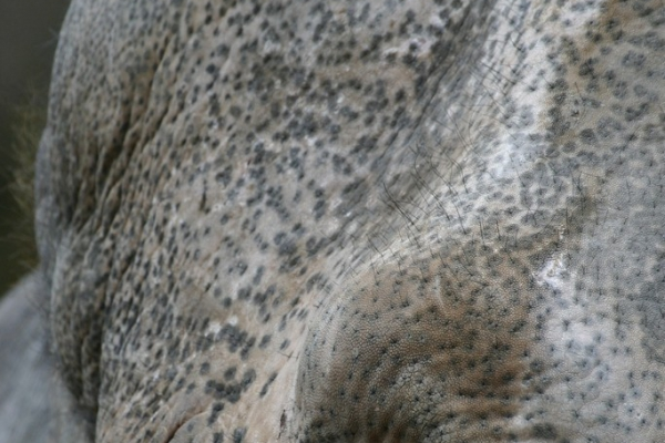 aziatische-olifant-00547E74BE9F-5E1F-89CA-C020-63148FEA2781.jpg